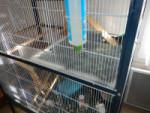 protections autour de la cage Small